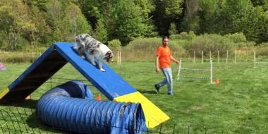 dogmatch