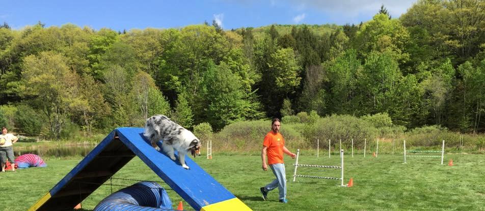 dogmatch - Version 2